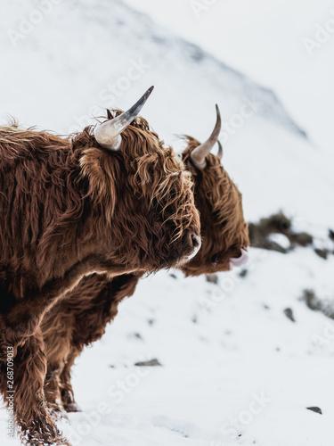 Fototapeta Faroese