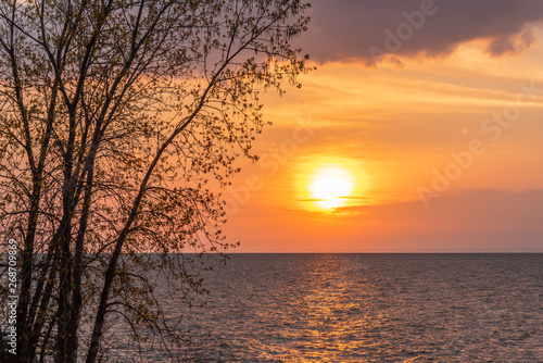 Orange sunset over water with tree silhouette