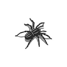 Silhouette Of A Spider Tarantula Insect In Isometric Shape With Shadows, 3D Tattoo Design