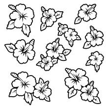 Hibiscus Flower Material Illustration