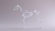 Horse Skeletal System Anatomical Model Left View 3d Illustration 3d Render