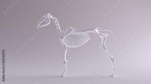 Fototapeta Horse Skeletal System Anatomical Model Left View 3d illustration 3d render obraz