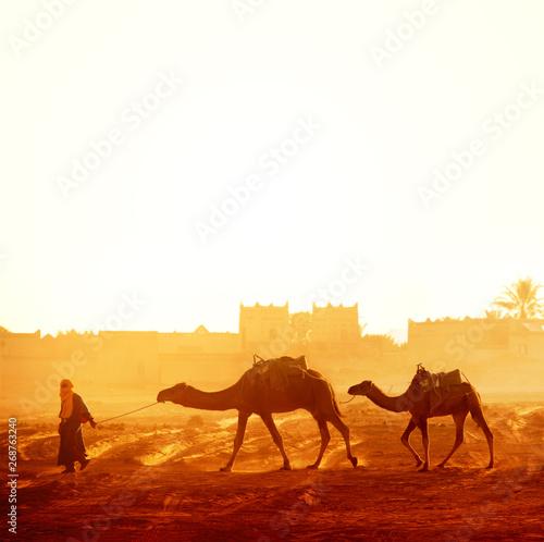 Poster Maroc Caravan of camels in Sahara desert, Morocco