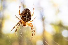 Spider Crusader On The Hunt