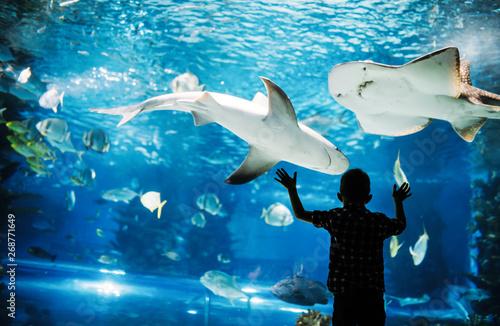 Canvas Cute boy watches fishes in aquarium