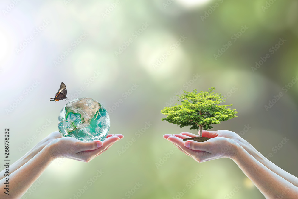 Fototapeta World environment day and go green with csr concept with tree planting on volunteers' hand. Element of the image furnished by NASA