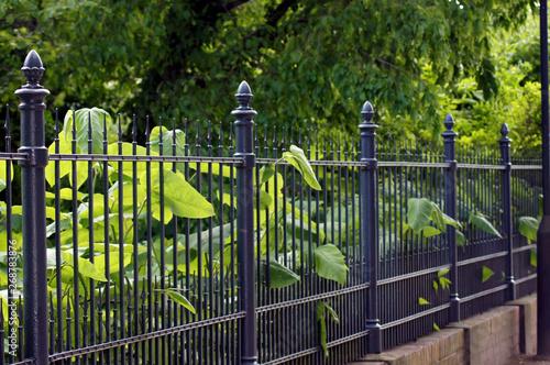 Photo Gartenzaun aus Eisen in schwarz