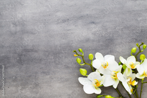 Papiers peints Montagne Beauty orchid on a gray background. Spa scene.