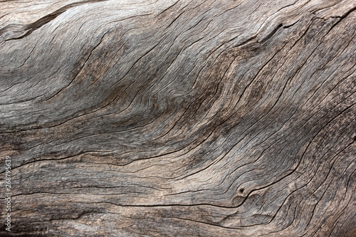 tree trunk texture abstract background Wallpaper Mural