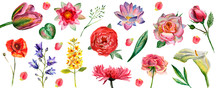 Flowers Watercolor Illustration. Set Of Flowers Isolated On White Background
