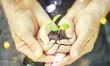 Leinwandbild Motiv Senior man and kid holding green plant in hands