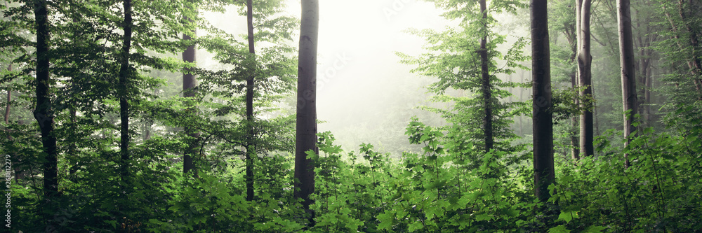 Fototapety, obrazy: panoramic forest landscape, green woods panorama with lush vegetation