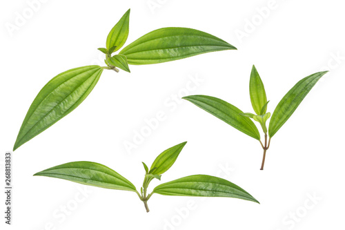Canvas Prints Condiments Three beautiful young leaves on a white background