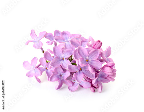 Foto op Aluminium Lilac Beautiful lilac flowers on white background