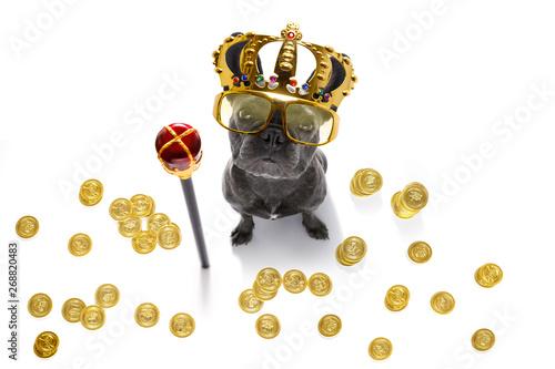Fotobehang Crazy dog king rich money dog