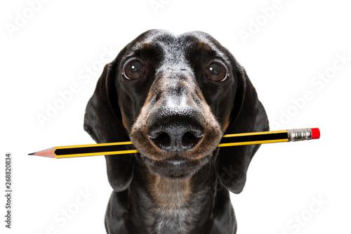 Fotobehang Crazy dog office worker boss dog