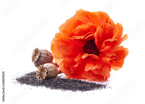 Poppyhead with seeds and flower - 268840241