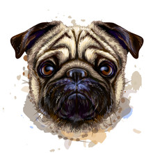 Pug. Artistic Graphic, Hand-dr...