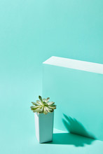 Echeveria Plant In A White Flowerpot Isolated On A Blue Background With A Reflection Of The Shadows Of A Copy Space