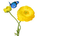 Beautiful Yellow Flower And Colorful Butterflies Isolated On A White Background