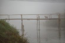 A Dog On A Rustic Bridge In The Fog.