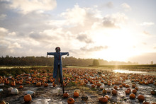 Scarecrow On Pumpkin Farm During Fall Season