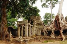 Roots Of A Banyan Tree Cover Ancient Ta Prohm. Angkor. Cambodia.