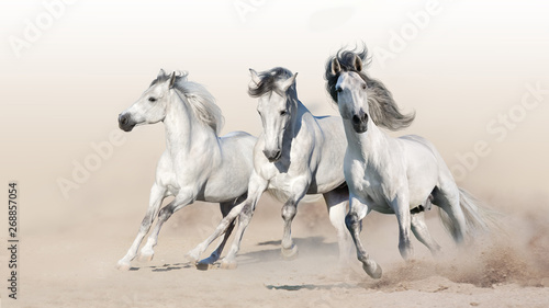 Foto op Canvas Paarden Three white horse run gallop on desert dust