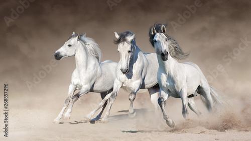 trzy-bialego-konia-biegaja-galopem-na-pustyni