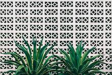 Decorative Tropical Plants Against White Brick Wall