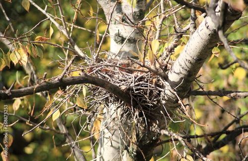 Fotografie, Obraz  convolute nest on tree