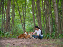 Two Lovely Welsh Corgi Dog With Young Girl Outdoor