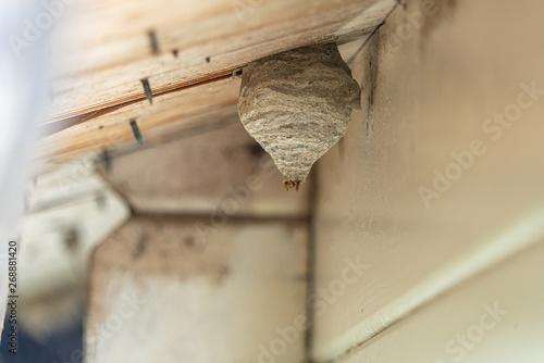 Vászonkép a black-yellow wasp builds a wasp nest under a wooden roof overhang