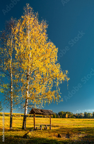Fotografie, Obraz  Arbor with benches near the field, under a birch with yellow leaves and under th