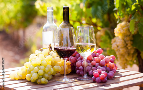 Photo Stands Wine glasses of red and white wine and ripe grapes on table in vineyard