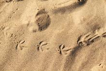 Bird Tracks In The Sand. Textu...