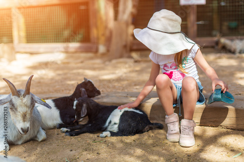 Fotomural little girl feeds a goat at a childrens petting zoo