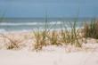 Grass in Sand Dunes