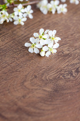 Fototapeta na wymiar white tender inflorescences (flowers) on a wooden background, copy space, card