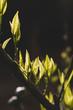 Sun shining on leaves growing on tree branch