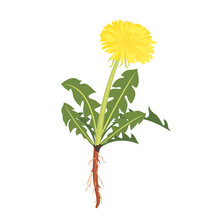 Dandelion Icon With Root Isolated On White.