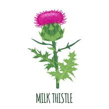 Milk Thistle Icon In Flat Styl...