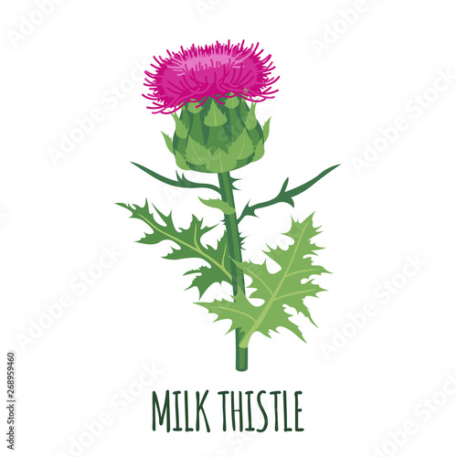 Stampa su Tela Milk Thistle icon in flat style isolated on white.