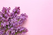 Beautiful lilac flowers on color background