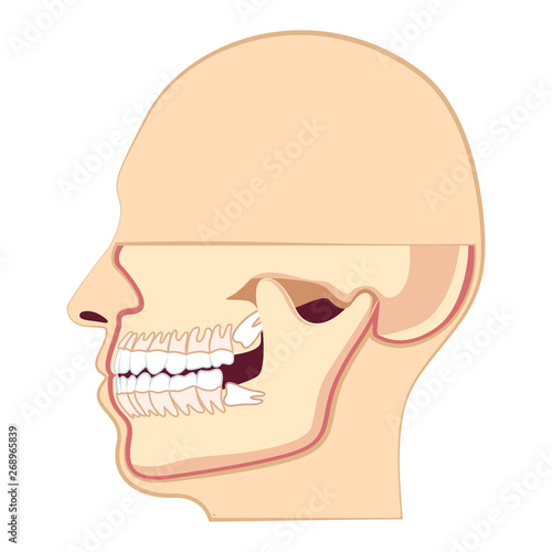 Human head with teeth. Jaw and wisdom tooth inside Canvas Print