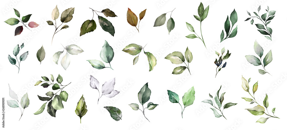 Fototapety, obrazy:  set watercolor leaves. collection herbal illustration. Botanic composition. nature modern design