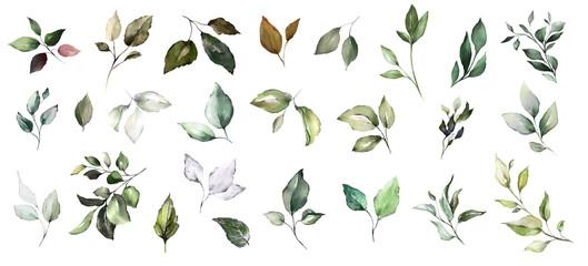 set watercolor leaves. collection herbal illustration. Botanic composition. nature modern design