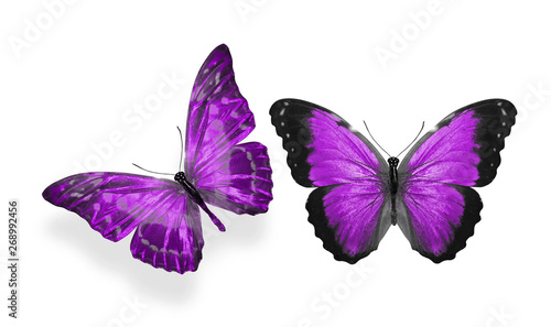Fotografie, Obraz  beautiful two purple butterflies isolated on white background