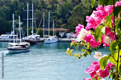 Fényképezés Beautiful bougainvillaea in pink and white colors with boats on the backgrtound