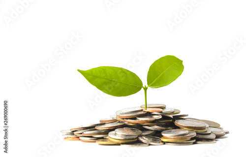 Plant is growing on pile of coins isolated on white Wallpaper Mural